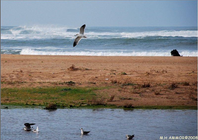 Seuls au monde ...et les oiseaux