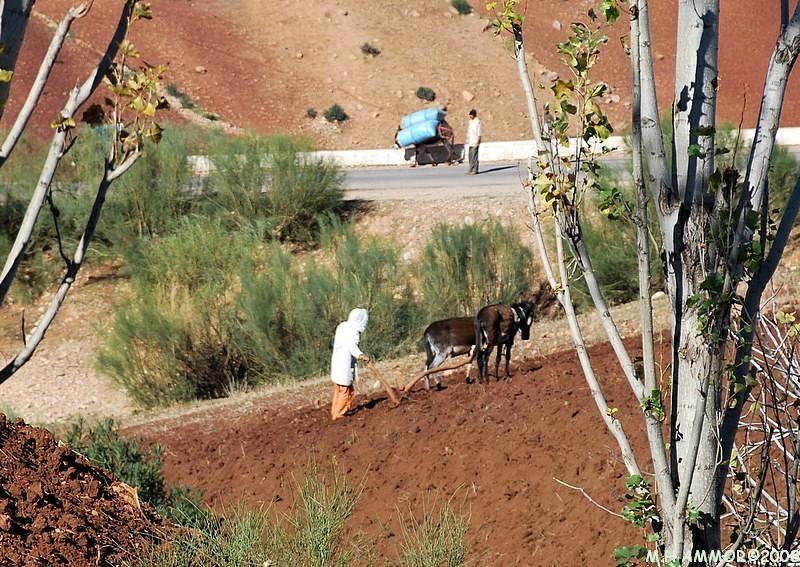 Labours / plowings