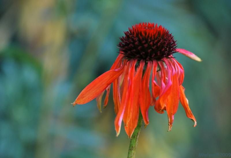 Fleurs de novembre 1