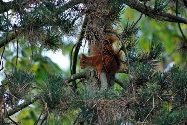 Jeux d'écureuil