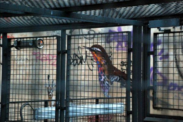 L'oiseau derrière la cage