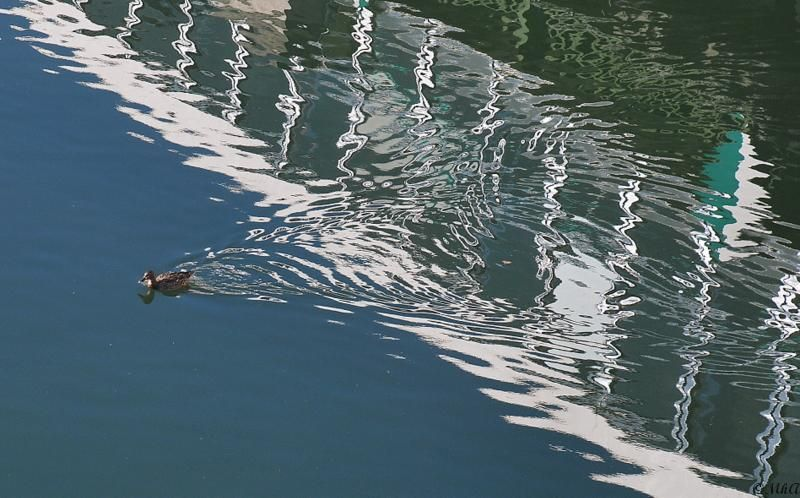 Dans l'eau , sauf les canards ...2