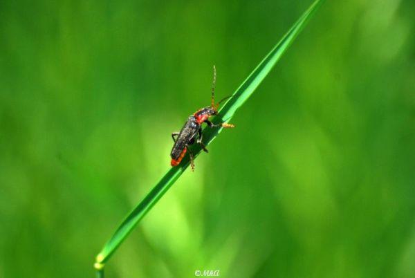 Sur un brin d'herbe