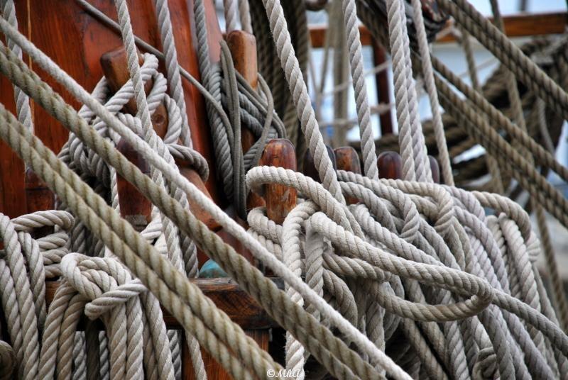 Les noeuds marins