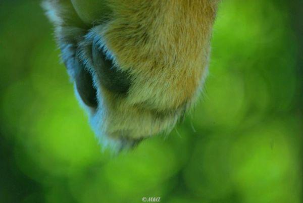 Coup de patte / Blow of paw