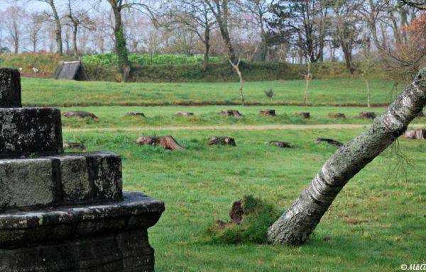 La malédiction des troncs