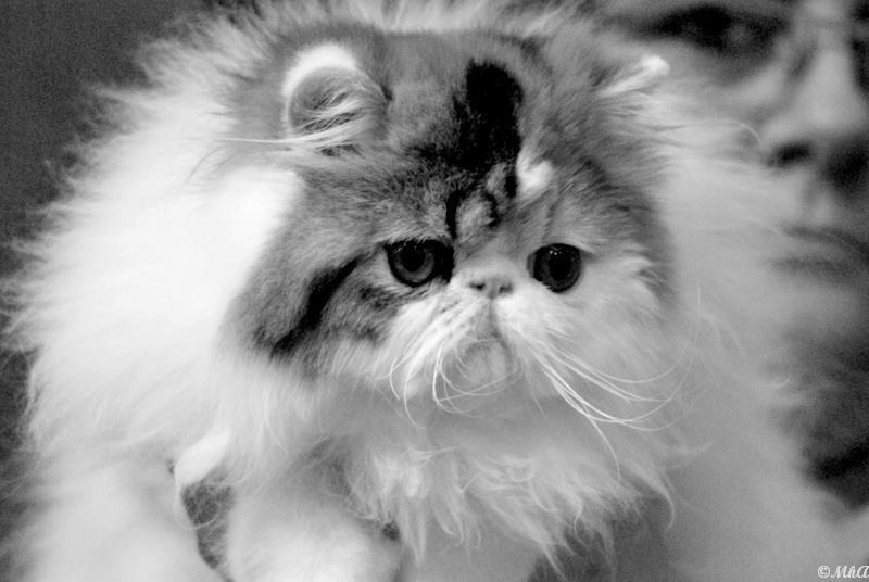 Feline Show 1