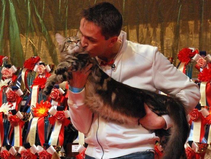 Feline Show 3