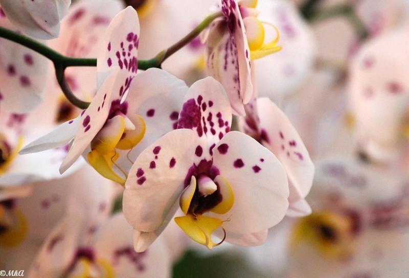 Les orchidées 1