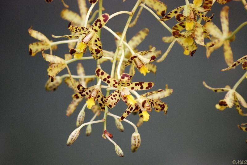 Les orchidées 5