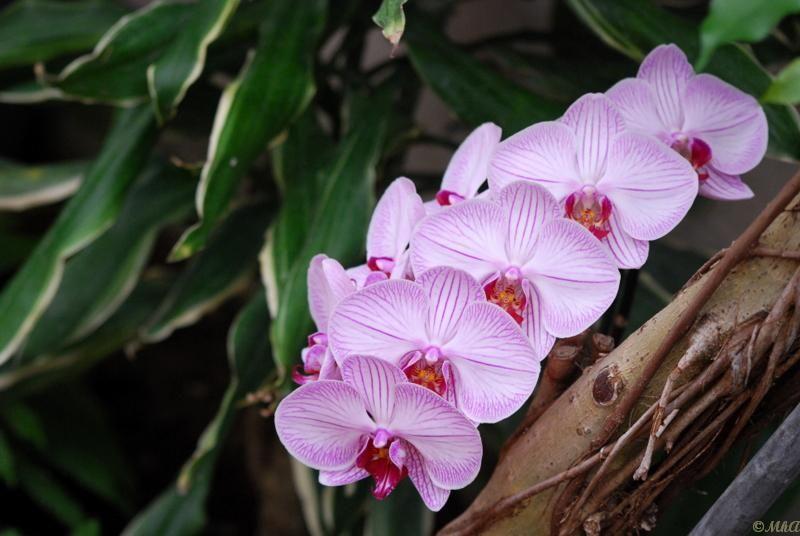 Les orchidées 6