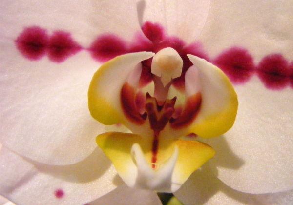 Les orchidées 4
