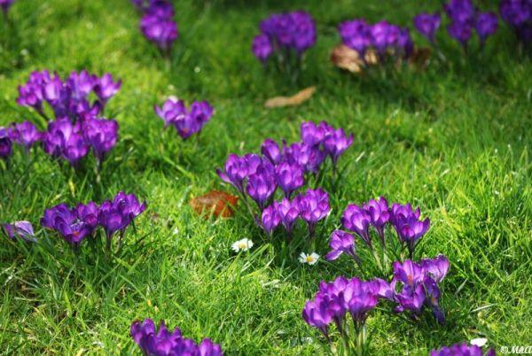 Vers le printemps