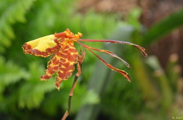 Passions d'orchidées 2