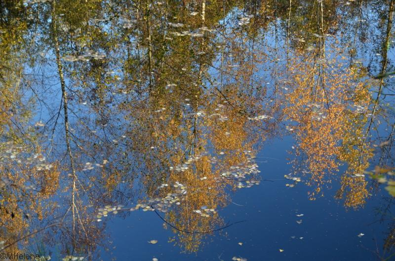 La forêt dans l'étang