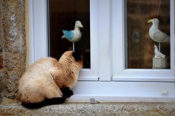 The cat is out and birds  inside ...??!!