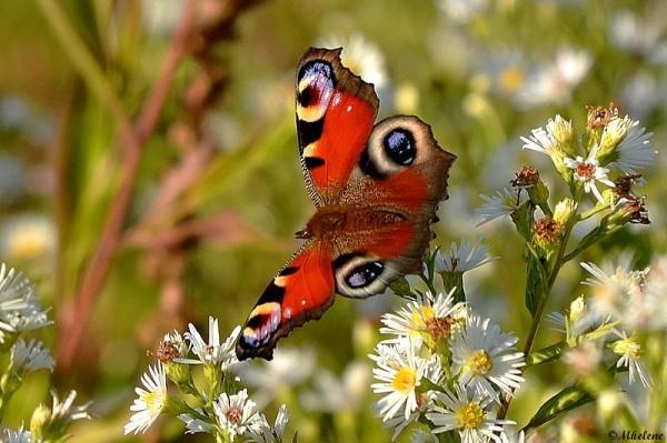 Papillon de septembre