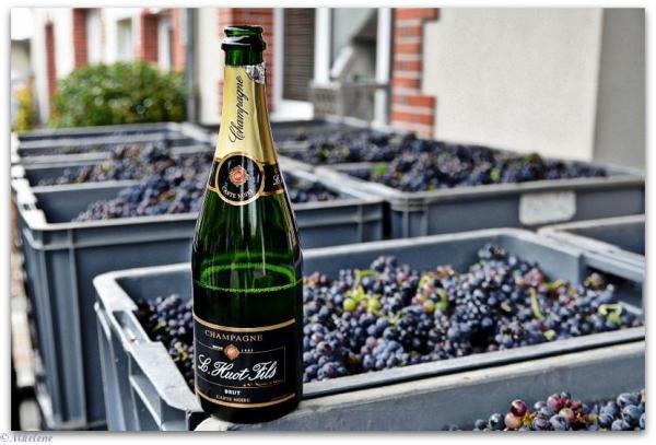 Vendanges en Champagne 18