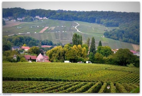 Vendanges en Champagne 19