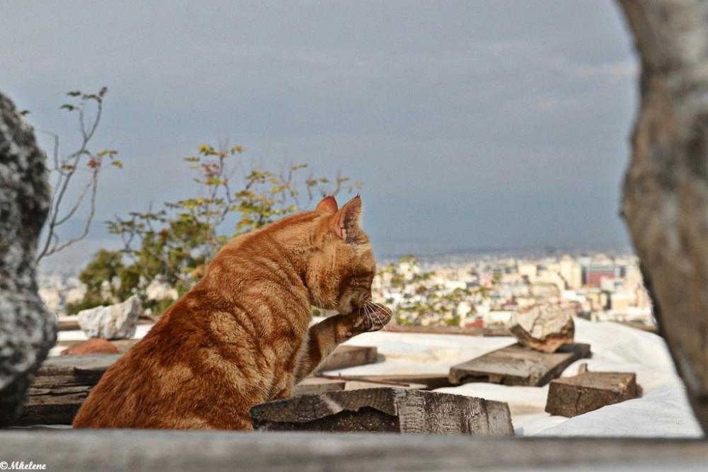 Eveil sur les toits