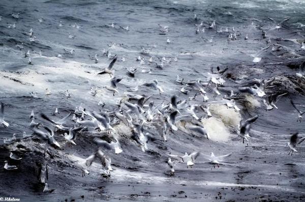 Jeux dans les vagues