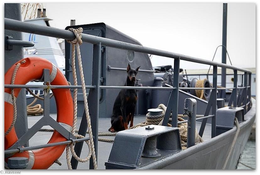 Gardien à bord