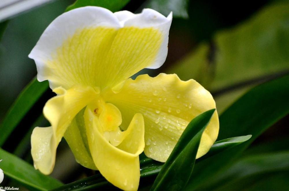 Mille et une orchidées 2