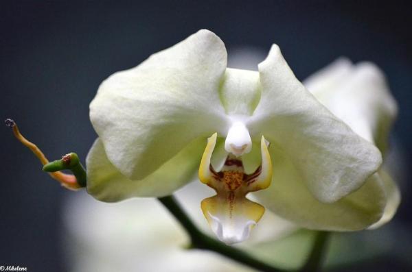 Mille et une orchidées 4