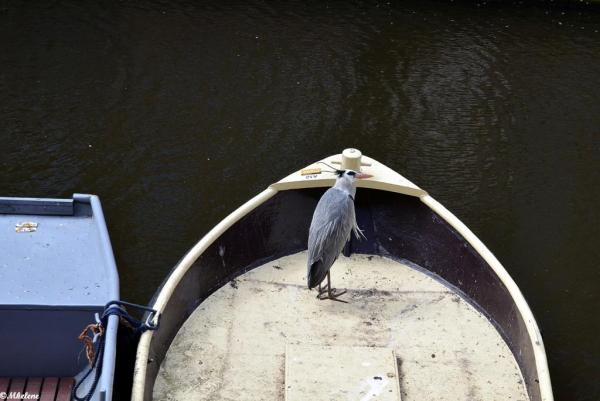 Les canaux d'Amsterdam   3