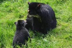 P'tit ours et sa maman - 1