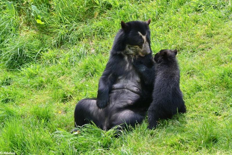 P'tit ours et sa maman   2