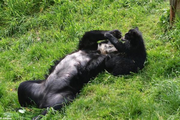 P'tit ours et sa maman   3