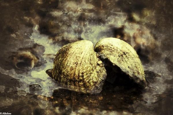 La coque dans la marée