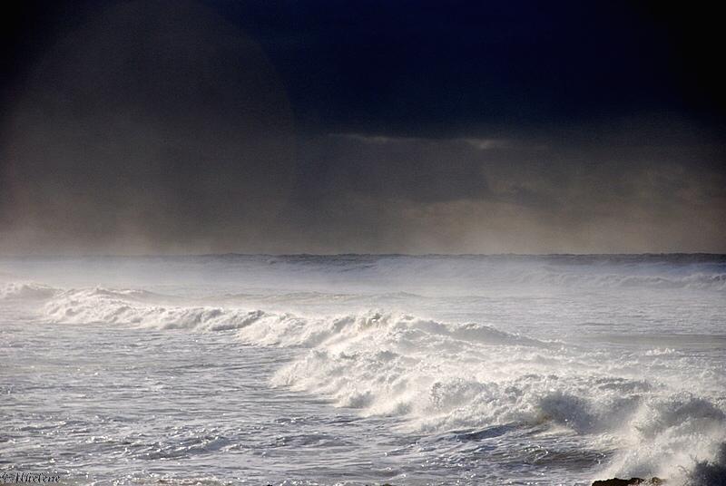 Grain noir à l'horizon
