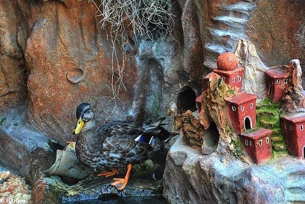Un canard en son village