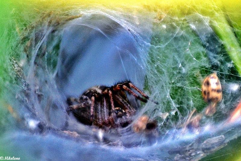 Le nid de l'araignée