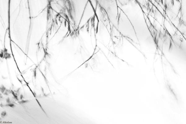 Les branches fouettées