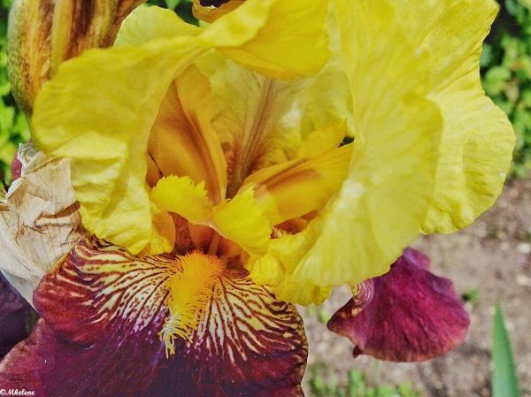 Dans les couleurs de l'iris