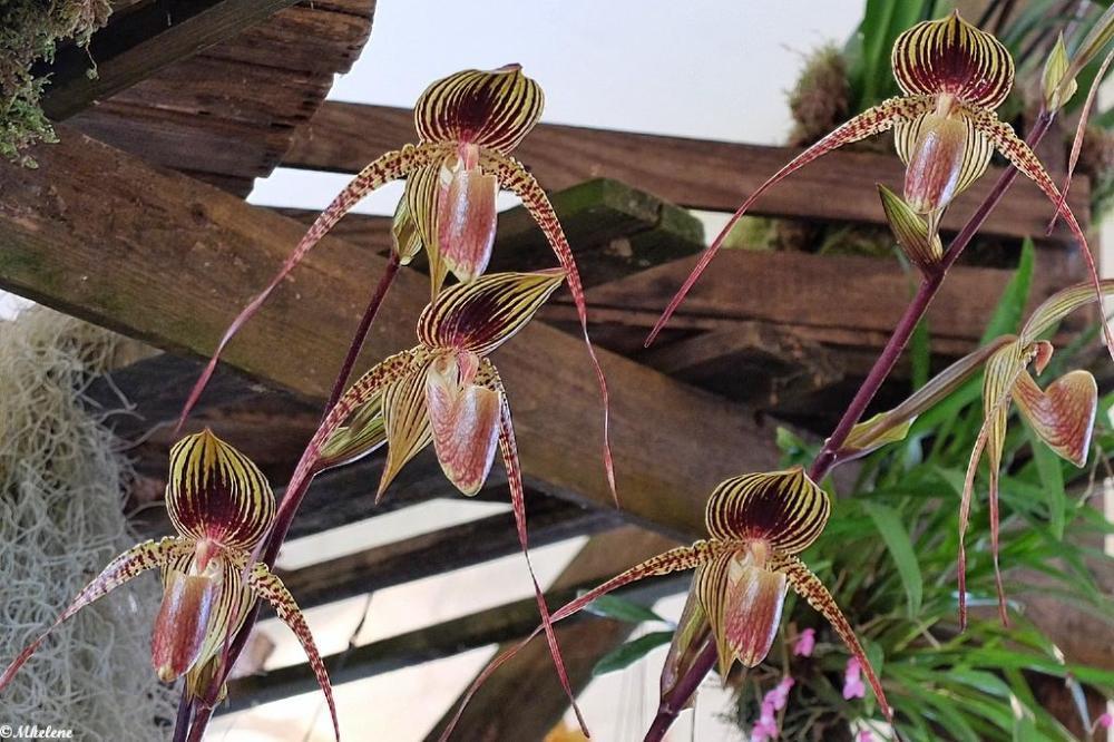Orchidées à l'Abbaye