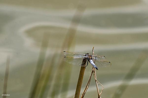 Le petit monde de l'étang - 2