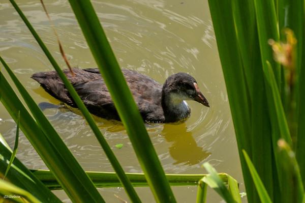 Le petit monde de l'étang - 7
