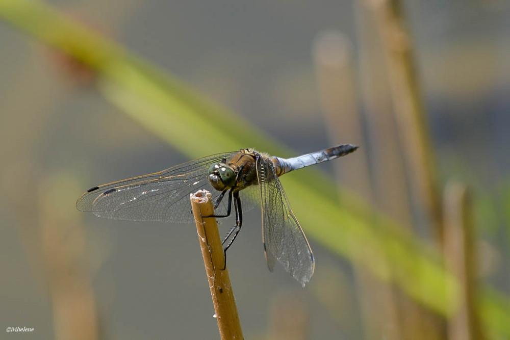 Le petit monde de l'étang - 9