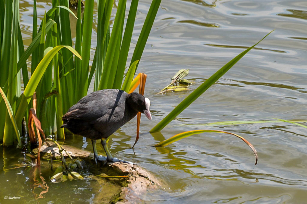 Le petit monde de l'étang - 10