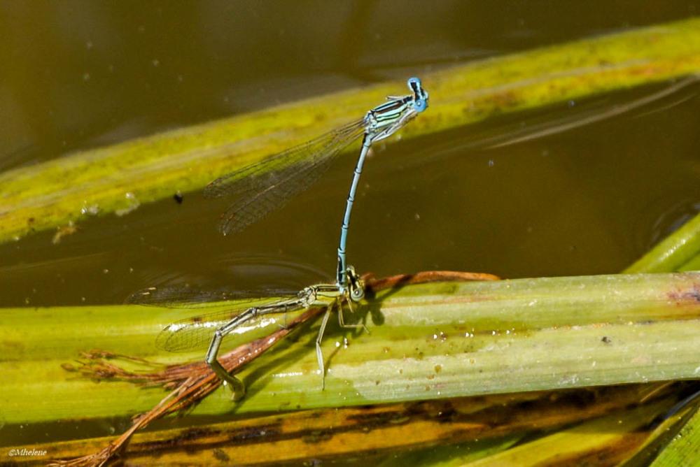 Le petit monde de l'étang - 12