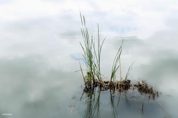 Les nuages de l'étang