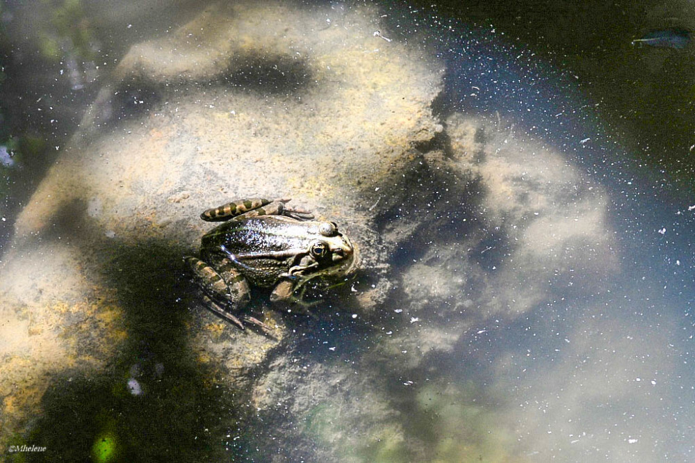 La galaxie des grenouilles - 2
