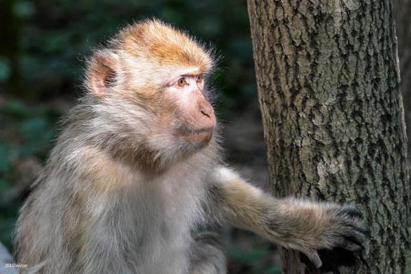Terre de singes 2