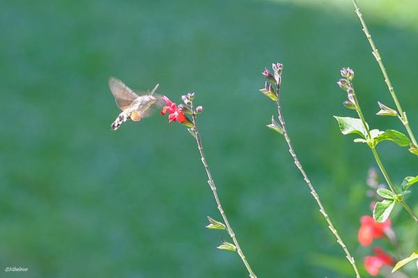 Sur les fleurs de septembre -4