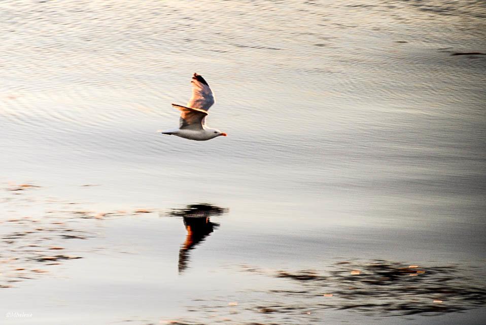 Soir sur la mer d'iroise