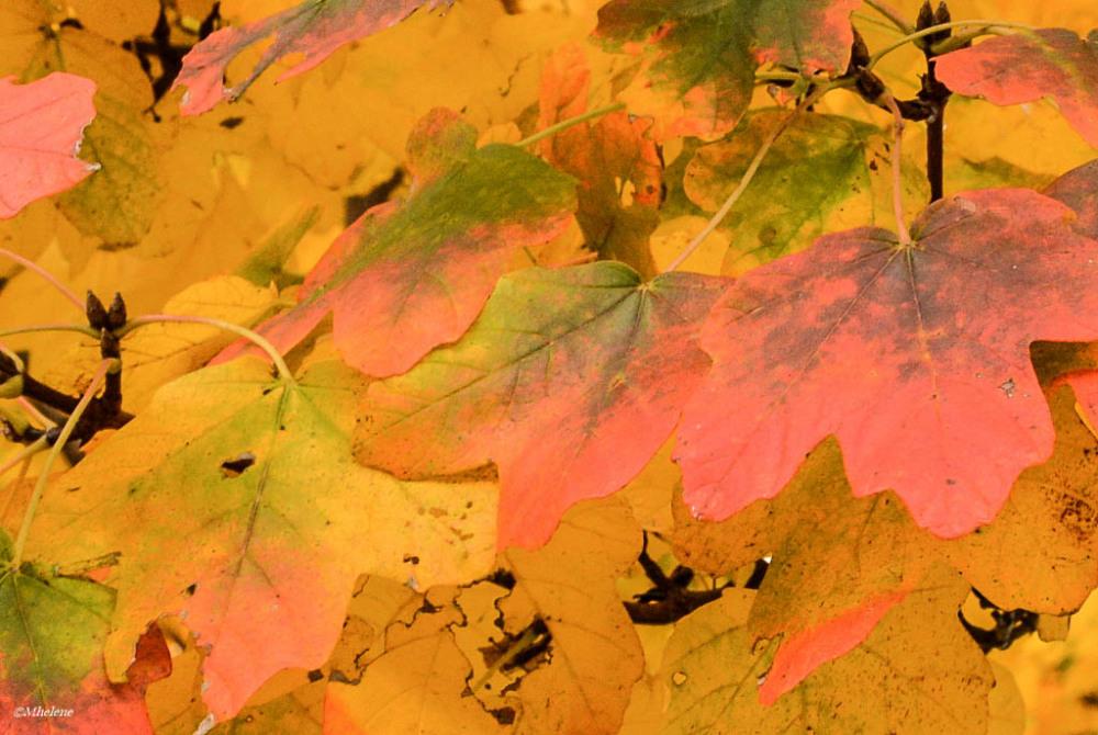 L'automne dans les arbres